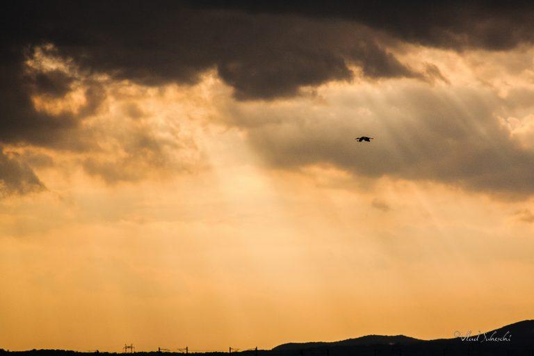 Stoarm Stork . In Prahova Romania